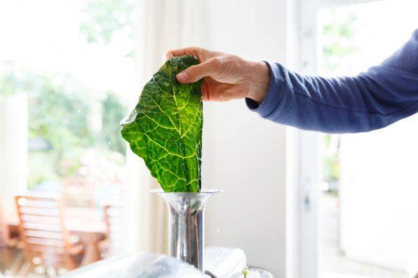 slowjuicing leaf