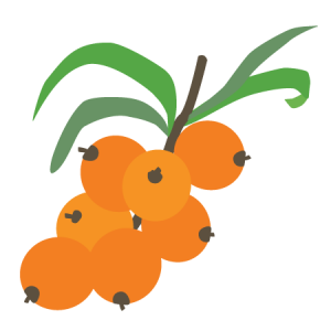 sea ​​buckthorn berries icon