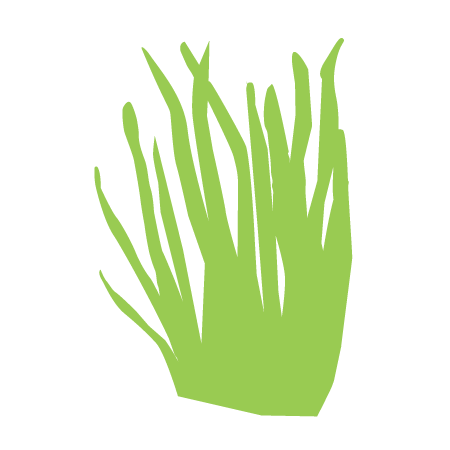 wheatgrass icon